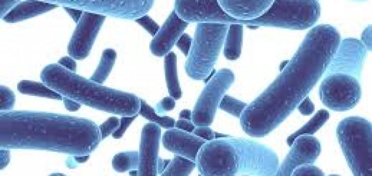 Men vi sinh Lactobacillus Reuteri DSM 17938 – Vua của các lợi khuẩn